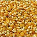 TITMUSS FRENCH MAIZE 20KG thumbnail