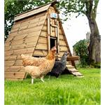 Chickenguard Premium Door Opener Thumbnail Image 1